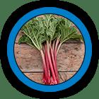 Rhubarb (Root)